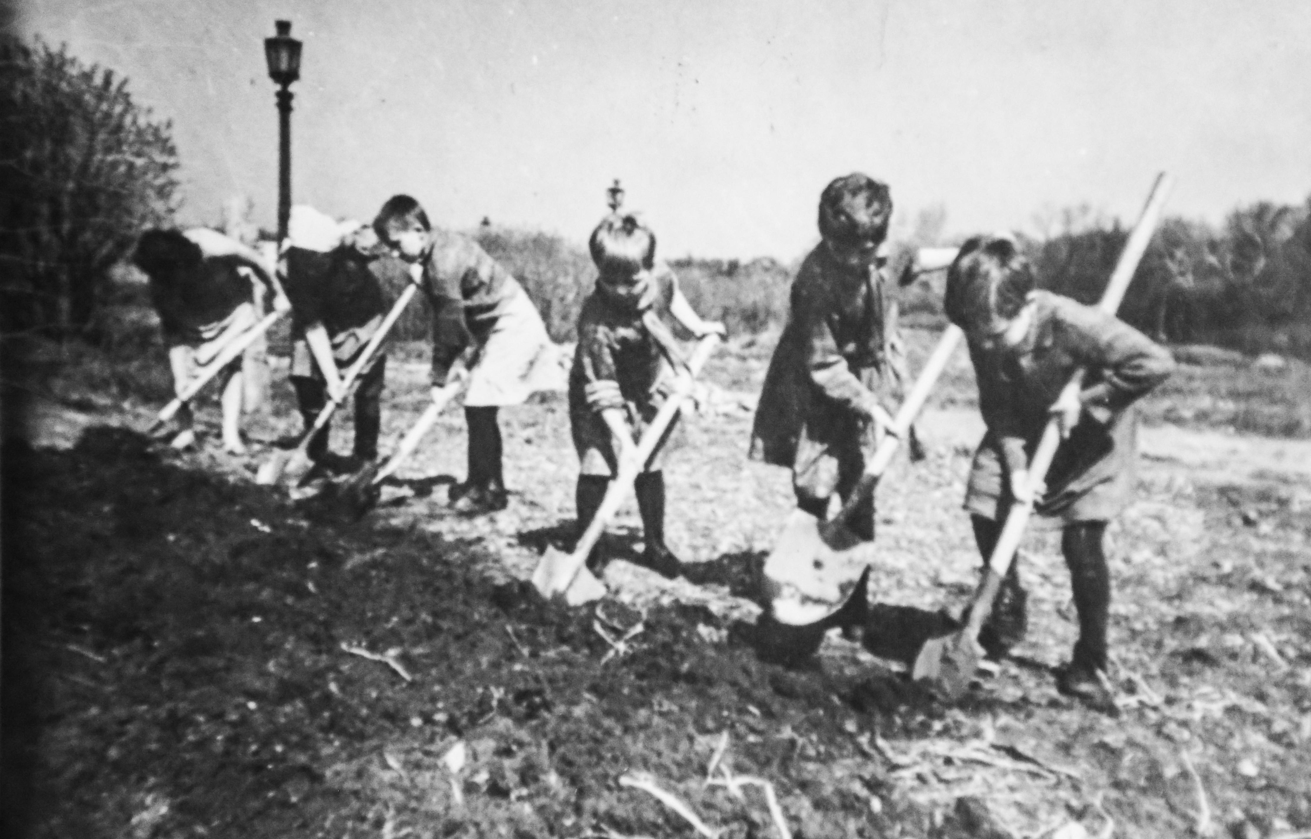 Дети копают землю под  грядки на Марсовом поле. 1942 г.